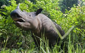 Mozambique Rhino (Getty Images)